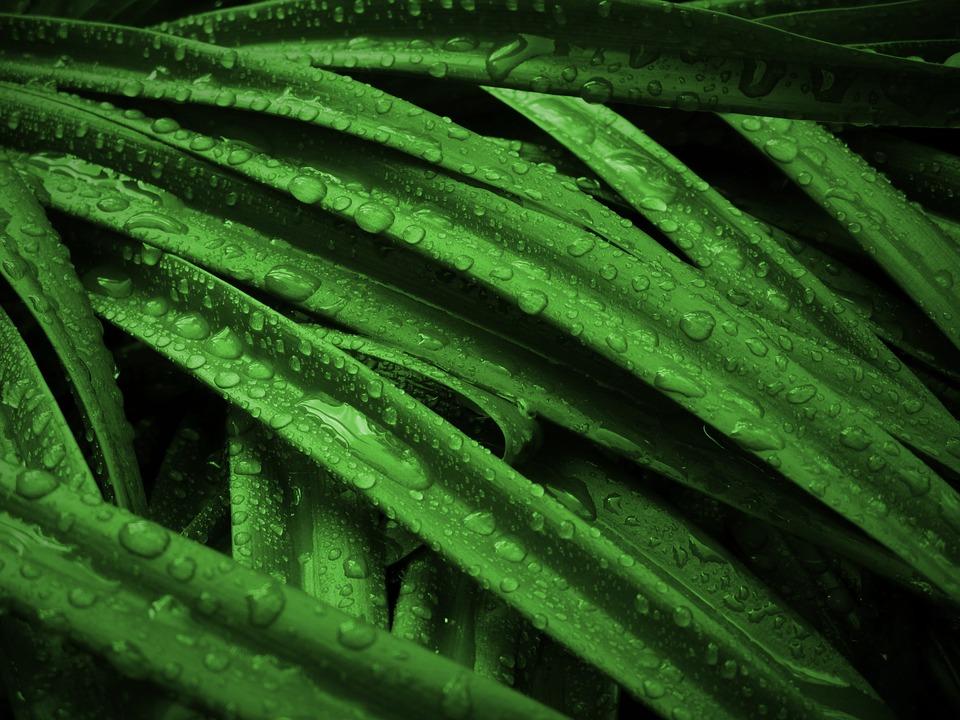 plant-1534333_960_720