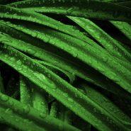 Zielono mi, czyli najmodniejsze rośliny doniczkowe w aranżacji wnętrz