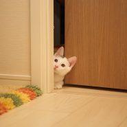 Jakie powinny być drzwi pokojowe?
