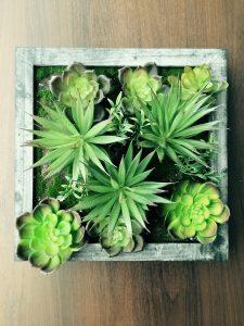 plant-1835563_1280